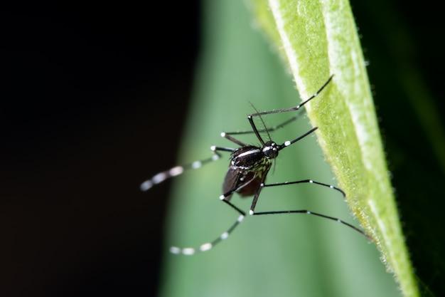 Macro, moustique sur les feuilles Photo Premium