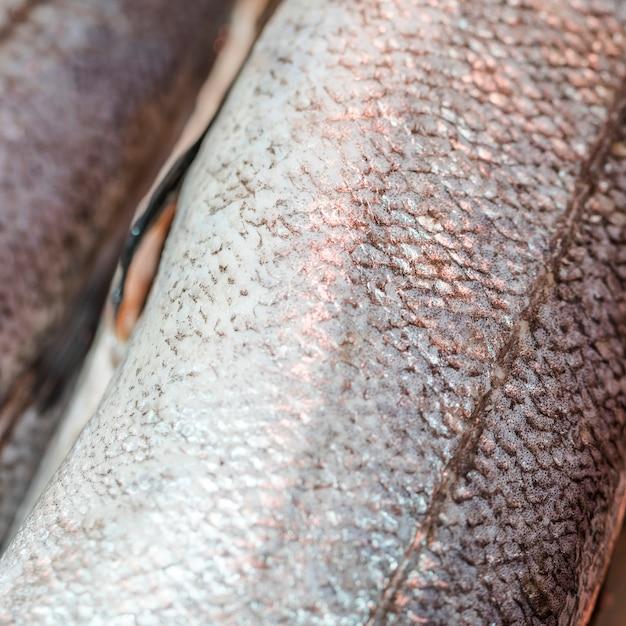 Macro shot de poisson congelé en magasin Photo gratuit