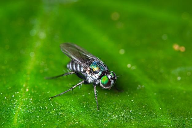 Macro vole sur les feuilles vertes Photo Premium