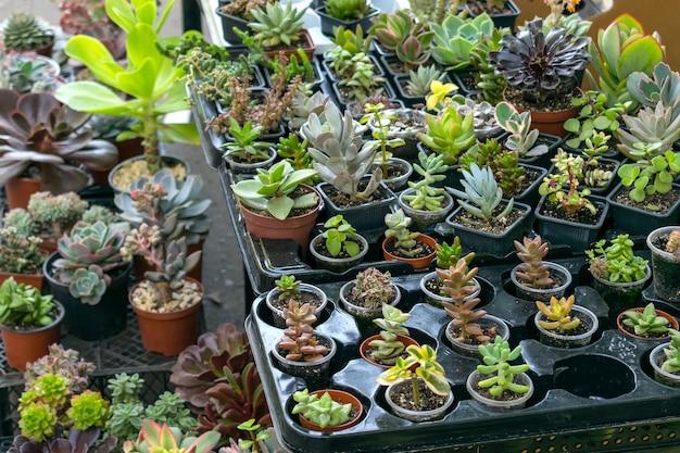 Magasin de rue de plantes d'intérieur de fleur Photo Premium