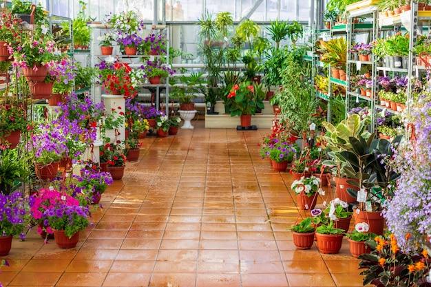 Magasin de serres commerciales vendant des fleurs et des plantes dans des pots de fleurs Photo Premium