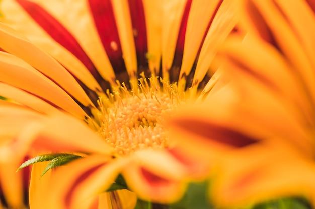 Magnifique fleur jaune exotique Photo gratuit