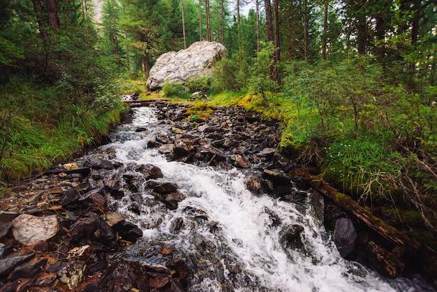 Magnifique jet d'eau rapide dans un ruisseau de montagne sauvage Photo Premium