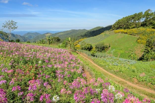 Magnifique Paysage De Montagne A La Fleur De Fleur D Araignee En