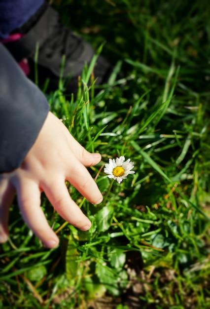 Main de bébé avec fleur de marguerite Photo Premium