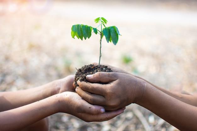 Main d'enfants tenant des plantes et du sol avec bokeh et fond de nature Photo Premium