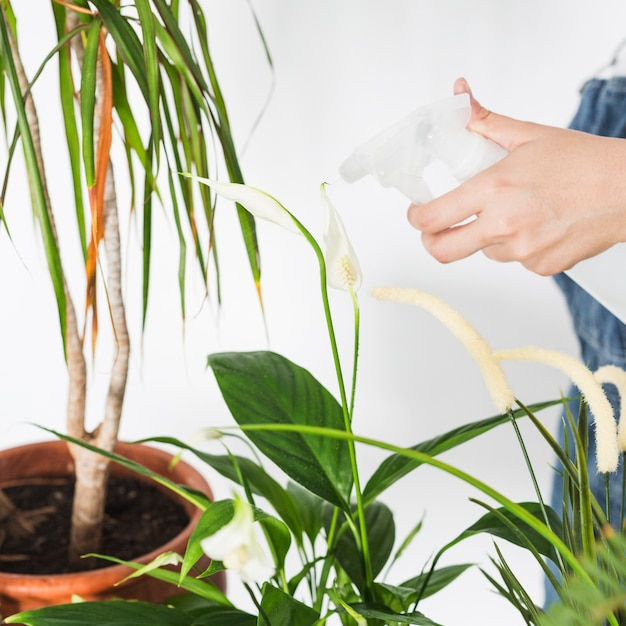 Main féminine, pulvérisation, eau, sur, plante, à, vaporisateur Photo gratuit