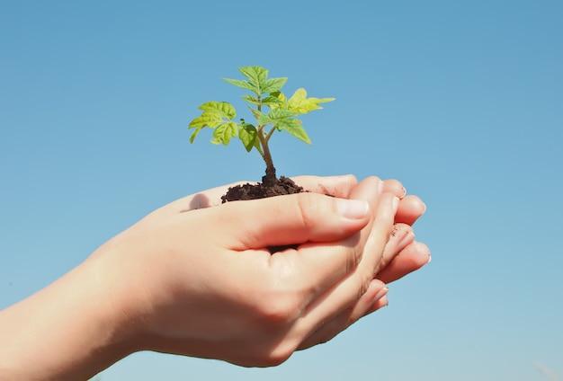 Main féminine tenant pousse. earth day save concept de l'environnement. plantation de planteurs forestiers. Photo Premium