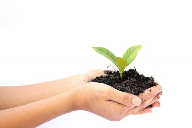 Main de femme tenant une petite plante verte Photo Premium