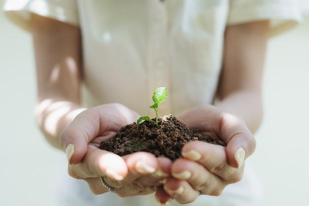 Main De Femme Tenant Une Plante Germée, Plante De Semis Dans Le Sol. Sauver La Terre Et Planter Des Arbres Photo Premium