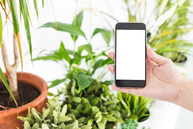 Main de femme tenant un téléphone portable près de plantes en pot Photo gratuit