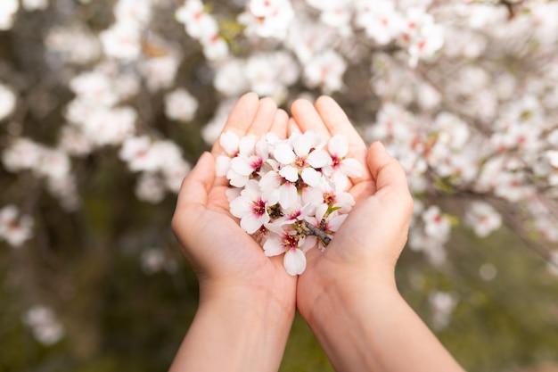 Main De Femme Touchant Les Fleurs D'arbre En Fleurs D'amandier. Cerisier à Fleurs Tendres. Incroyable Début De Printemps. Mise Au Point Sélective. Concept De Fleurs. Photo Premium