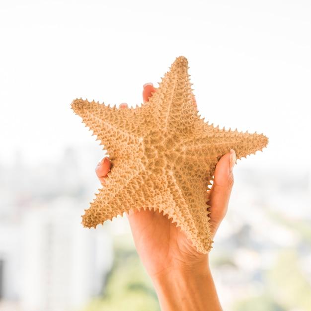 Main avec grosse étoile de mer Photo gratuit