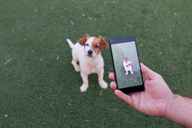 Main de l'homme avec un téléphone intelligent prenant une photo d'un mignon petit chien sur l'herbe verte Photo Premium