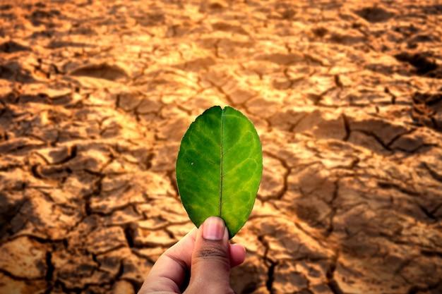 Main de l'homme tenant une feuille sur des problèmes environnementaux de sol sec fissuré. Photo Premium