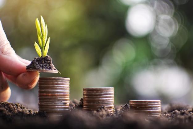 Main de l'homme tenant la pièce de monnaie planter de l'argent au succès. Photo Premium