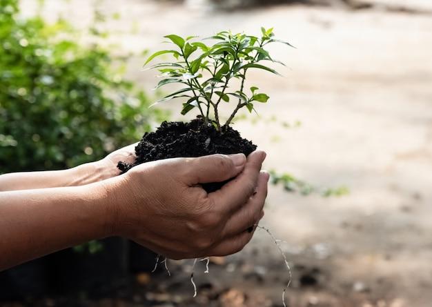 La main humaine tenant jeune plant, protection et soin, environnement Photo Premium