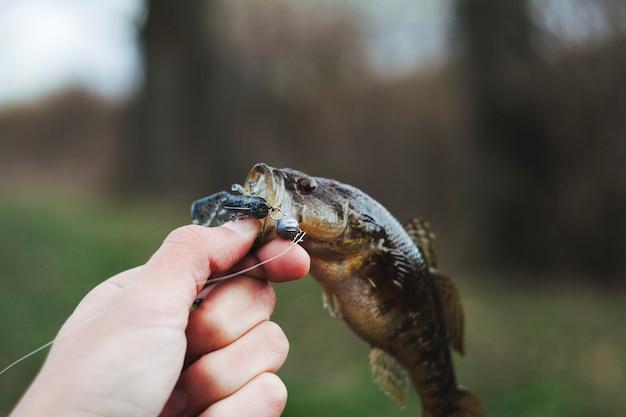 Main humaine, tenue, poisson frais Photo gratuit