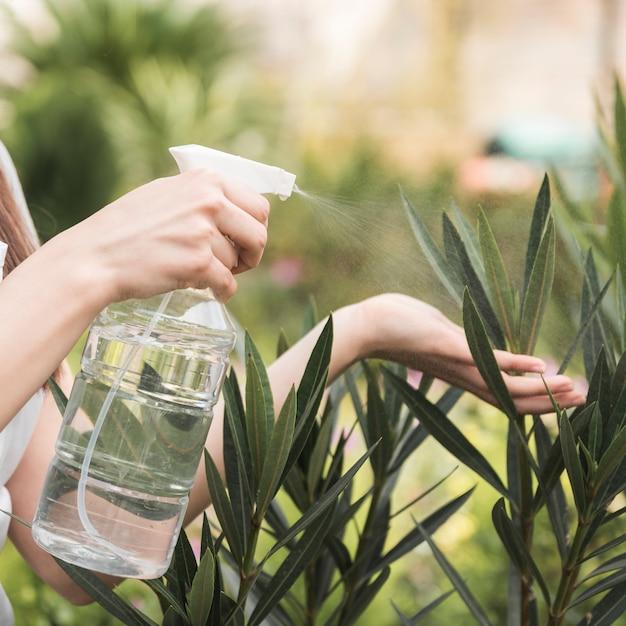 Main de jardinier féminin pulvériser de l'eau sur les plantes de bouteille en plastique Photo gratuit