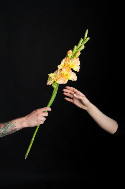 Main Masculine Avec Des Tatouages Donnant Une Fleur De Glaïeul Jaune à La Main Féminine, Une Carte De Voeux Ou Un Concept Photo Premium