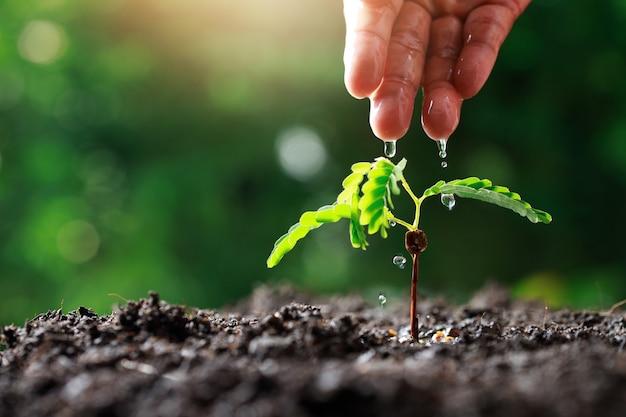 Main paysan arroser jeunes plantes Photo Premium