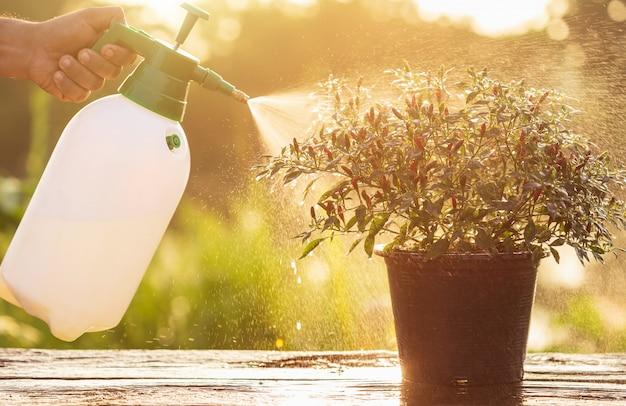 Main tenant un arrosoir et un spray sur une jeune plante dans le jardin Photo Premium