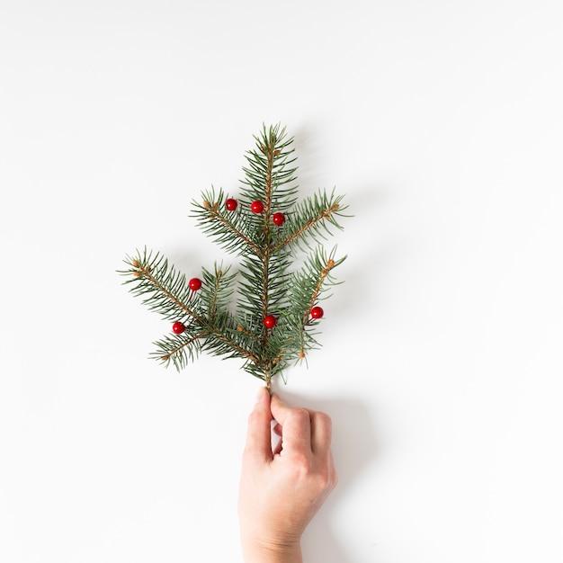 Main tenant une branche d'arbre conifère avec baies rouges Photo gratuit