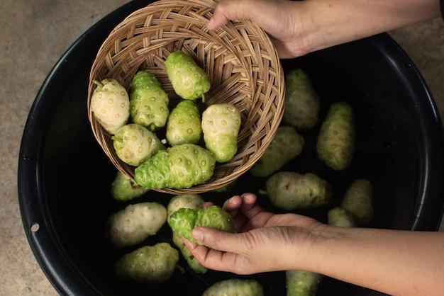 Main tenant un fruit de noni dans un panier et un bac à fruits de noni ..jpg Photo Premium