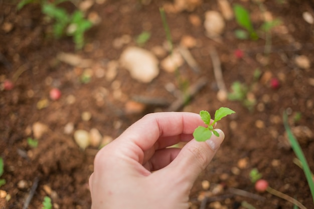 Main tenant un jeune plant Photo gratuit