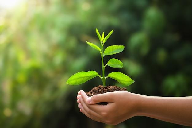 Main tenant jeune plante et fond vert avec le soleil. jour de la terre concept eco Photo Premium