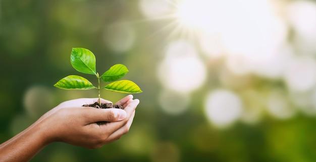 Main tenant la jeune plante sur la nature verte flou. Photo Premium