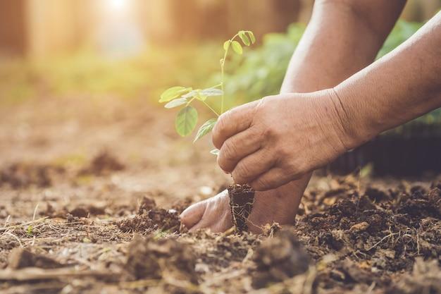 Main tenant et plantant jeune arbre de pois de papillon dans le sol. sauver le monde et le concept d'écologie Photo Premium