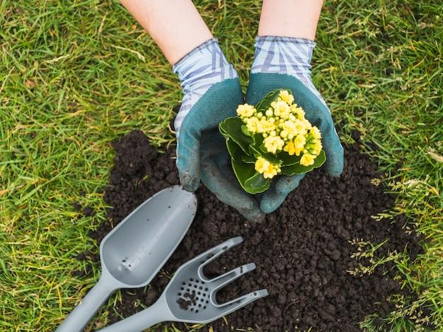 Main tenant la plante à fleurs dans sa main Photo gratuit