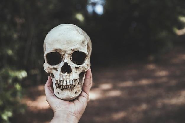 Main, tenue, crâne, forêt Photo gratuit