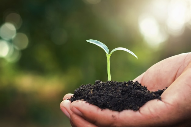Main, tenue, petit arbre, planter, jardin Photo Premium