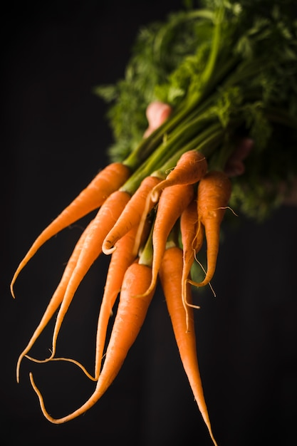 Main, tenue, tas, carottes Photo gratuit