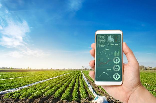Une main tient un smartphone avec infographie sur un champ de pomme de terre Photo Premium