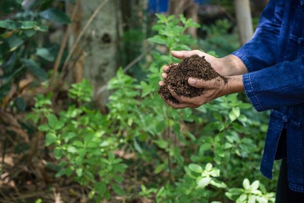 Mains d'agriculteur qui grandissent et entretiennent des arbres qui poussent sur un sol fertile. Photo Premium