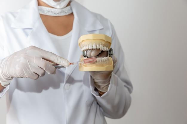 Mains d'un dentiste montrant comment se brosser les dents correctement. Photo Premium