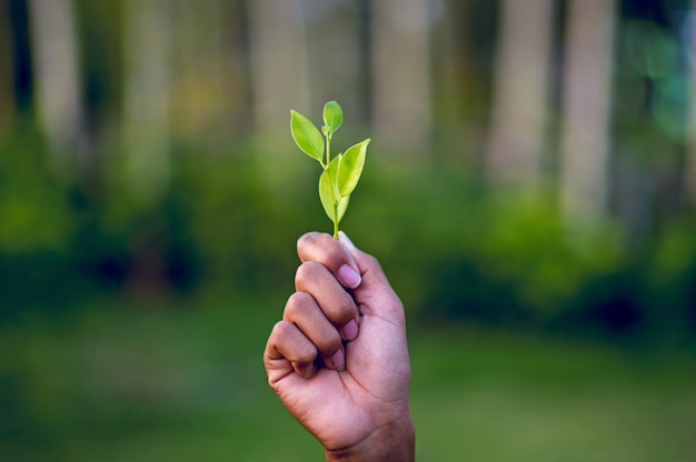 Mains et feuilles vertes Photo Premium