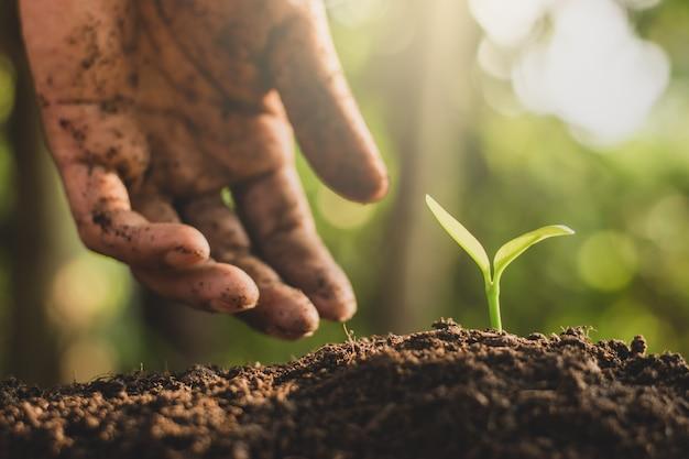 Les mains des hommes plantent les plants dans le sol. Photo Premium