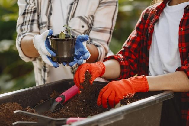 Les Mains Des Jardiniers. Planter Une Femme Dans Un Nouveau Pot Photo gratuit
