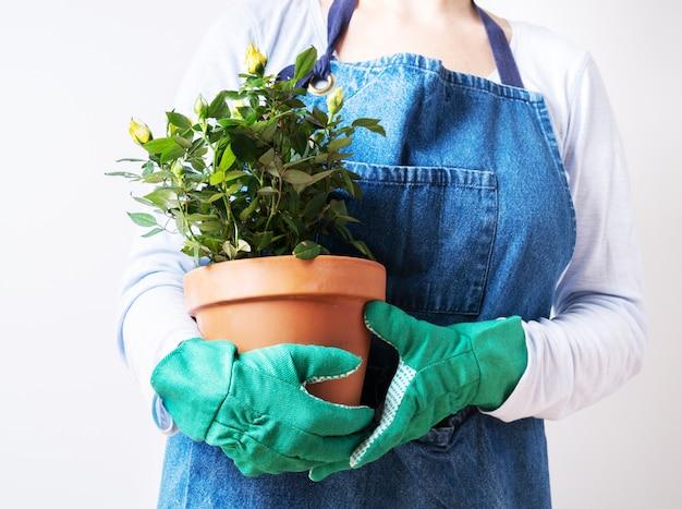 Mains d'une jeune femme en train de planter des roses dans le pot de fleurs. planter des plantes à la maison. jardinage à la maison. Photo Premium