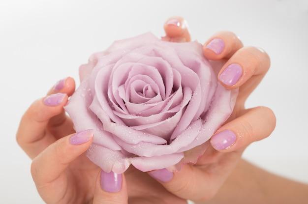Mains Manucurées Lilas Et Une Rose Photo Premium
