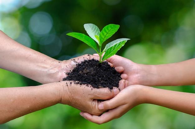 Mains tenant des plants en croissance Photo Premium