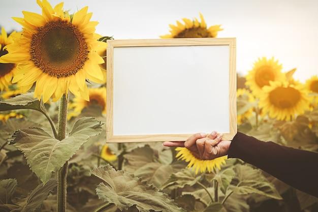 Mains tenant un tableau blanc sur fond de tournesol Photo Premium