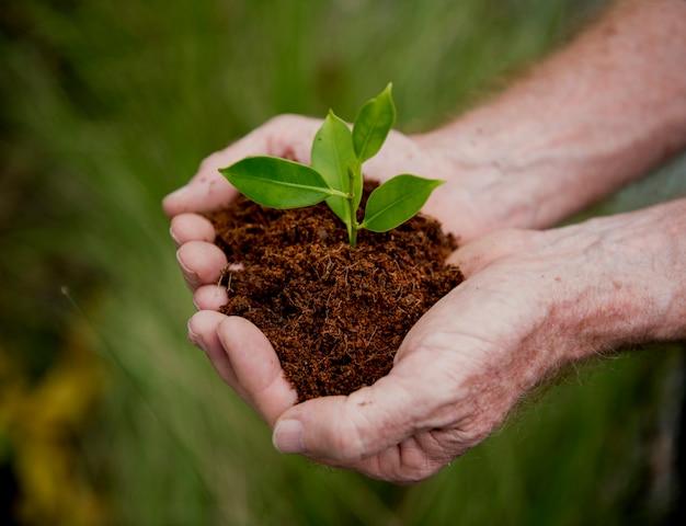 Mains tenant un tas de terre avec une plante en croissance Photo Premium