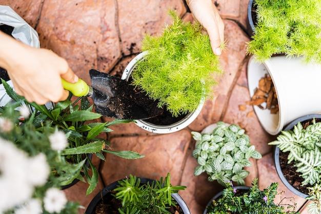 Mains Transplantant Une Plante Dans Un Nouveau Pot à La Maison Photo Premium