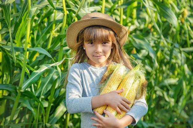 Maïs sur le champ entre les mains d'un enfant Photo Premium