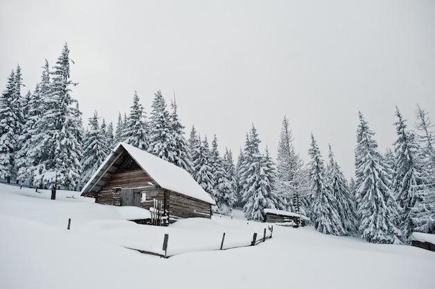 Maison Bois, à, Pins, Couvert, Neige, Sur, Montagne, Chomiak, Beaux, Paysages Hiver, De, Carpates, Ukraine, Nature Givre, Photo Premium